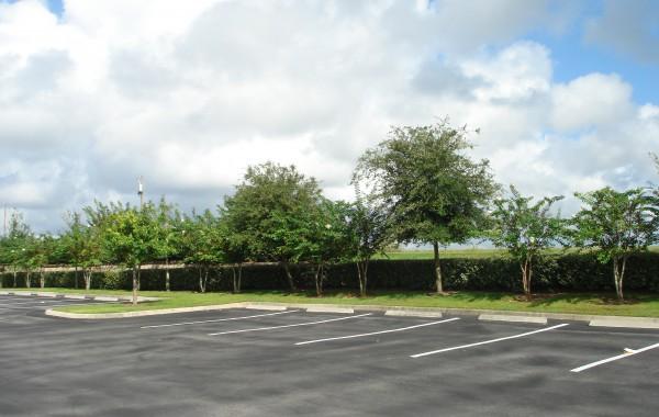 Commercial Landscape 10